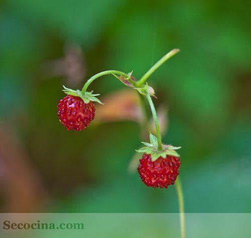 fresas silvestres